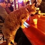 cat bar drinking meme