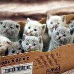 box of cats meme