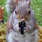 funny squirrels with guns (5) meme