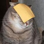 Cats with cheese meme