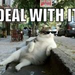Deal with it cat meme