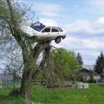 car in tree meme