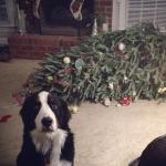Dog Christmas Tree meme