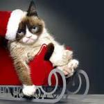 Compliance Cat Holidays meme