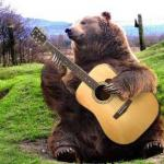 bear with guitar  meme