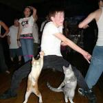 Cats Dancing meme