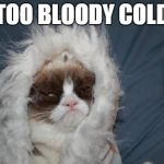 Cold grumpy cat  | TOO BLOODY COLD | image tagged in cold grumpy cat | made w/ Imgflip meme maker