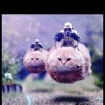 flying cat stormtrooper meme