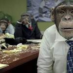Office monkeys meme