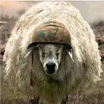 Sheep soilder meme