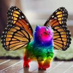 Rainbow unicorn butterfly kitten meme