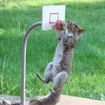 Squirrel basketball meme