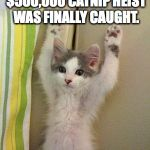 Hands up kitten | THE CULPRIT OF THE $500,000 CATNIP HEIST WAS FINALLY CAUGHT. | image tagged in hands up kitten | made w/ Imgflip meme maker