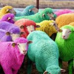Easter Sheep | HIDE AND SEEK CHAMPIONSHIPS APRIL 5TH 2015 | image tagged in easter sheep | made w/ Imgflip meme maker