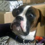 Surprise | Whoa! The ball was behind your back the entire time? | image tagged in surprise,dogs,boxer,funny,memes | made w/ Imgflip meme maker