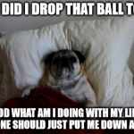 sleepless thoughts dog | WHY DID I DROP THAT BALL TODAY GOD WHAT AM I DOING WITH MY LIFE, SOMEONE SHOULD JUST PUT ME DOWN ALREADY | image tagged in sleepless thoughts dog | made w/ Imgflip meme maker