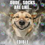Not sure where I was going with this... | DUDE... SOCKS ARE LIKE... EDIBLE | image tagged in memes,stoner dog,socks | made w/ Imgflip meme maker