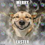 Stoner Dog Meme | MERRY EASTER | image tagged in memes,stoner dog | made w/ Imgflip meme maker