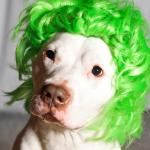 Green Wig Dog meme