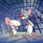 Pinky and the Brain meme