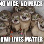 Excited Owls | NO MICE, NO PEACE ! OWL LIVES MATTER | image tagged in excited owls | made w/ Imgflip meme maker