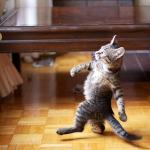 strutting kitten meme
