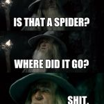 IS THAT A SPIDER? WHERE DID IT GO? SHIT. | image tagged in memes,confused gandalf | made w/ Imgflip meme maker