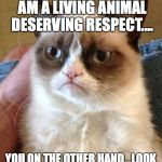 Grumpy Cat Meme | I AM NOT A PLAY TOY...I AM A LIVING ANIMAL DESERVING RESPECT.... YOU ON THE OTHER HAND...LOOK LIKE A SCRATCHING POST... | image tagged in memes,grumpy cat | made w/ Imgflip meme maker