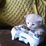 cat on xbox meme