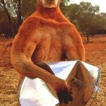 Kangaroo Crushing tin bucket meme