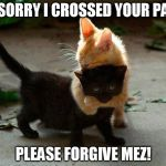 kitten hug | IM SORRY I CROSSED YOUR PATH PLEASE FORGIVE MEZ! | image tagged in kitten hug | made w/ Imgflip meme maker