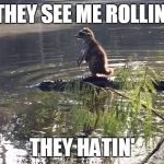 Raccoon Alligator Riding Meme Generator Imgflip
