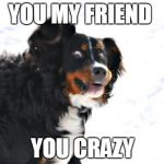 Crazy Dawg Meme | YOU MY FRIEND YOU CRAZY | image tagged in memes,crazy dawg | made w/ Imgflip meme maker