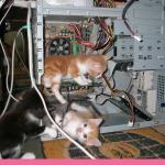 Kittens fixing a computer meme