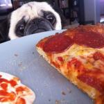 Pizza Pug meme