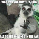 Stoner Lemur Meme | WANT AN ANATOMY LESSON? TALK TO THE 26 BONES IN THE HAND | image tagged in memes,stoner lemur | made w/ Imgflip meme maker