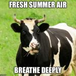 Have you driven by a farm recently? | FRESH SUMMER AIR BREATHE DEEPLY | image tagged in cows,memes,AdviceAnimals | made w/ Imgflip meme maker