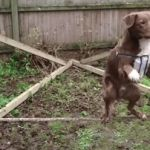 Amazing Acrobatic Dog | image tagged in gifs,acrobatic,dog,rope,amazing | made w/ Imgflip video-to-gif maker