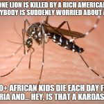 mosquito  | ONE LION IS KILLED BY A RICH AMERICAN & EVERYBODY IS SUDDENLY WORRIED ABOUT AFRICA. 1,000+ AFRICAN KIDS DIE EACH DAY FROM MALARIA AND... HEY | image tagged in mosquito | made w/ Imgflip meme maker
