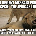 "Lion Cecil | AN URGENT MESSAGE FROM ""CECIL"" THE AFRICAN LION I'M A LION, YOU'RE ALL JUST LYING!  NONE OF YOU TRENDIES GIVE A DAMN. PETA, LOOK INTO THEM! 