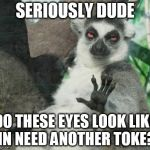 Stoner Lemur Meme | SERIOUSLY DUDE DO THESE EYES LOOK LIKE IN NEED ANOTHER TOKE? | image tagged in memes,stoner lemur | made w/ Imgflip meme maker