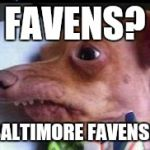 lisp dog | FAVENS? BALTIMORE FAVENS? | image tagged in favens,ravens,baltimore,lisp dog,dog,funny | made w/ Imgflip meme maker