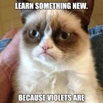 Let's learn something new.  | ROSES ARE RED, LET'S LEARN SOMETHING NEW. BECAUSE VIOLETS ARE PURPLE NOT F#CKING BLUE. | image tagged in memes,grumpy cat | made w/ Imgflip meme maker