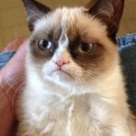 Grumpy Cat Meme | I SEE THAT U LOVE ME WELL,I DONT | image tagged in memes,grumpy cat | made w/ Imgflip meme maker
