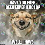 Stoner Dog | HAVE YOU EVER BEEN EXPERIENCED? WELL, I HAVE | image tagged in memes,stoner dog | made w/ Imgflip meme maker