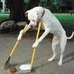 Dog Scooping Poop meme