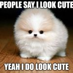 the doge mini | PEOPLE SAY I LOOK CUTE YEAH I DO LOOK CUTE | image tagged in derp doge | made w/ Imgflip meme maker