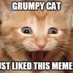 Excited Cat Meme Generator - Imgflip