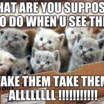 box of cats | WHAT ARE YOU SUPPOSED TO DO WHEN U SEE THIS TAKE THEM TAKE THEM ALLLLLLLL !!!!!!!!!!! | image tagged in box of cats | made w/ Imgflip meme maker