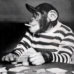 poker chimp meme
